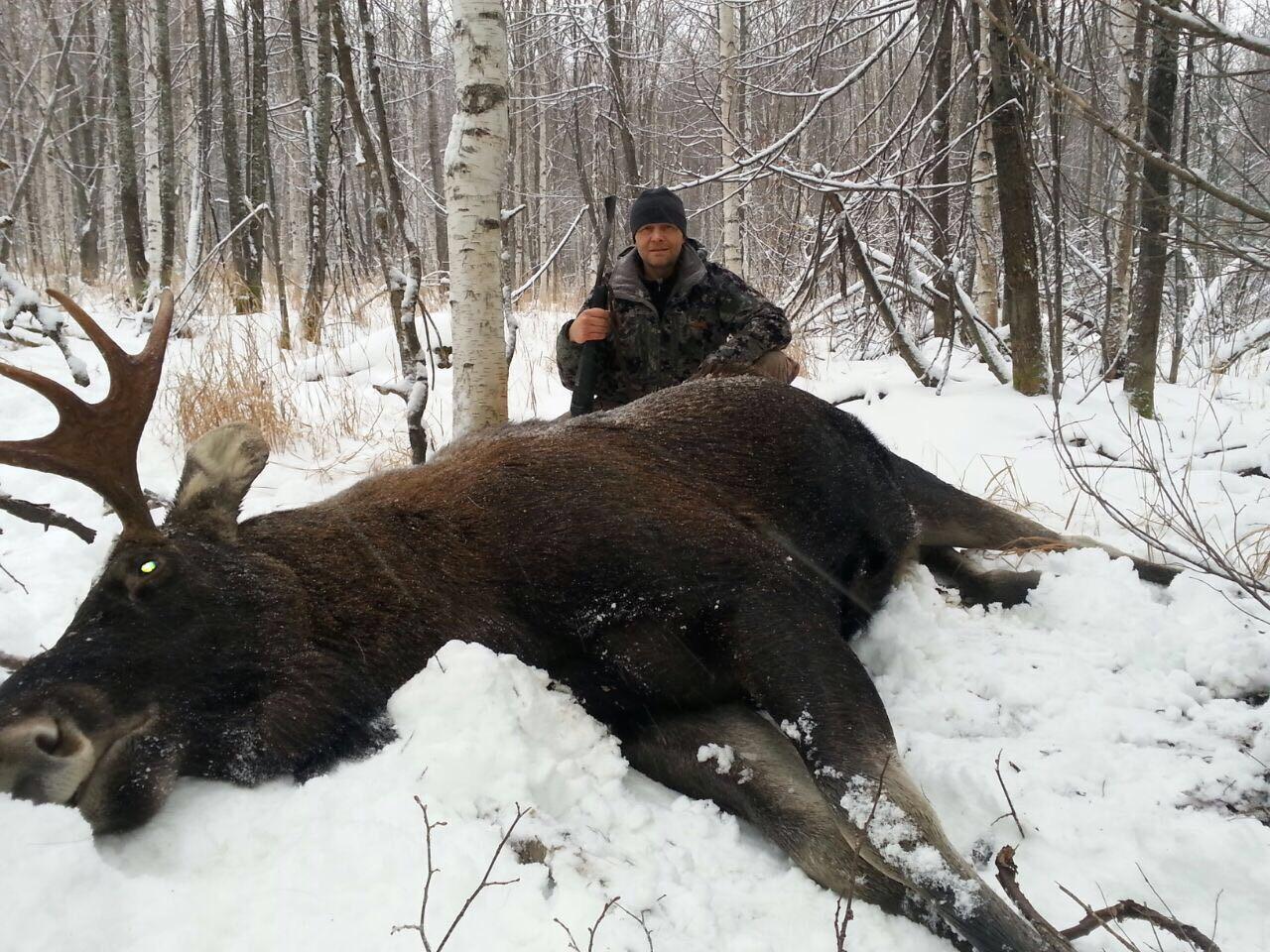 Охота на лося Сосновый Бор